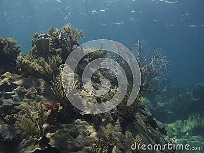 Coral mountain
