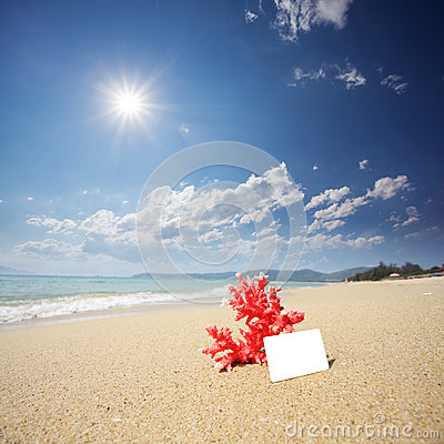 Coral with name card on beach