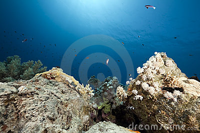 Coral On Oil Barrels Royalty Free Stock Photo - Image: 12860775