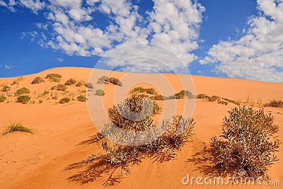Coral pink sand dune with shrub and blue sky with white clouds