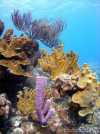 Free Coral Reef Royalty Free Stock Photos - 11160178