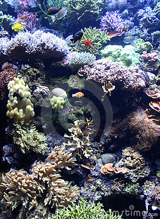 Free Coral Reef Royalty Free Stock Photos - 1326158