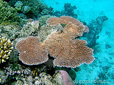 Coral on The Reef
