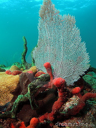 Free Coral Reef Stock Photography - 5711732