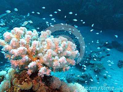 Coral reef with beutiful white hard coral and exotic fishes at the bottom of tropical sea