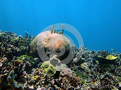 nature coral underwater landscape - photo #47