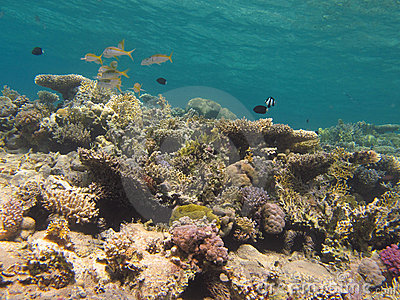 Coral reef and clear blue water