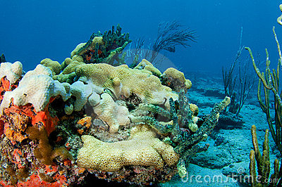 Coral Reef Composition.