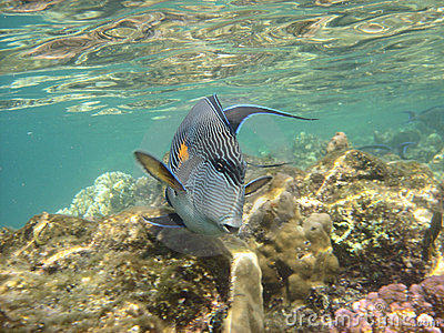 Coral reef and coralfishes