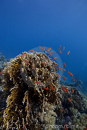 Coral-Reef in deep water with fishes around