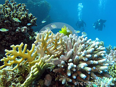 Coral reef and divers at the bottom of tropical sea