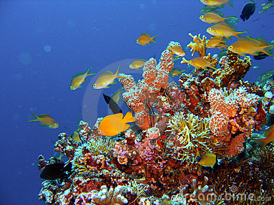 Coral Reef Fish on Sign Up And Download This Coral Reef Fish Image For As Low As  0 20