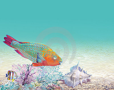 Coral reef with a fish-parrot