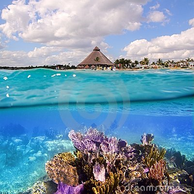 Free Coral Reef In Mayan Riviera Cancun Mexico Stock Photo - 18618860