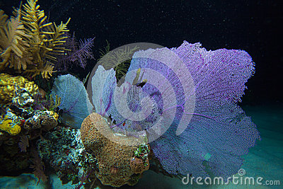 Coral reef during night dive, Cayo Largo, Cuba