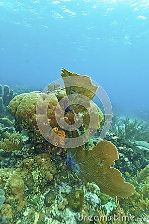 Coral reef off Roatan