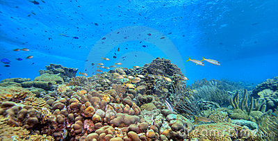 Coral Reef Panoramic Stock Photo - Image: 4315060