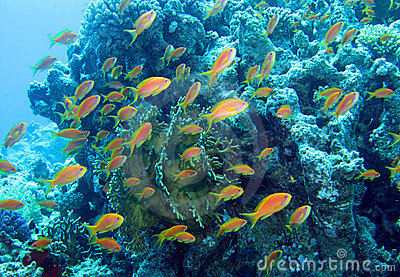 Coral Reef Red Sea