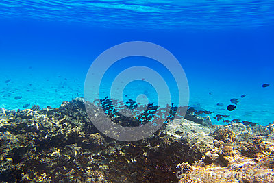 Coral reef of Red Sea with tropical fishes