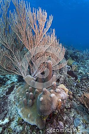 Coral reef  - Roatan Honduras