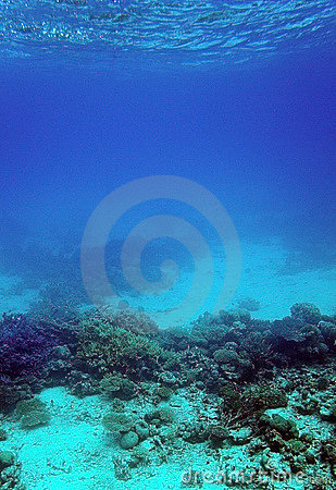 Coral reef and sand underwater