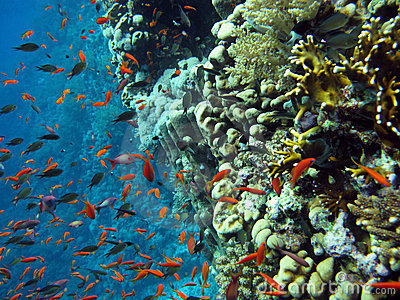 Coral reef with school of fishes