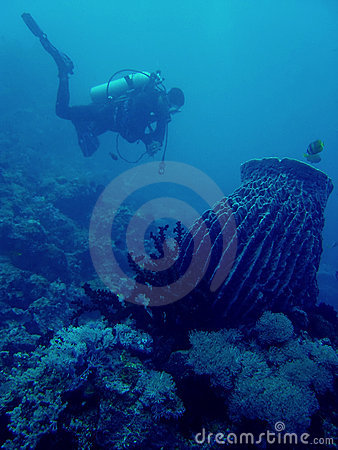 coral reef scuba diver philippines