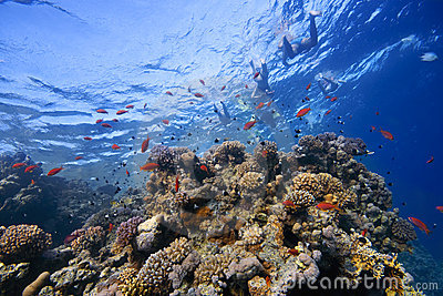 Coral-Reef in shallow water with fishes around