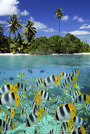 Free Coral Reef - Tahiti - French Polynesia Stock Image - 15290371