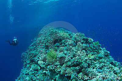 Coral reef with technical diver