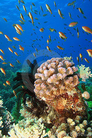 Coral Reef and Tropical Fish