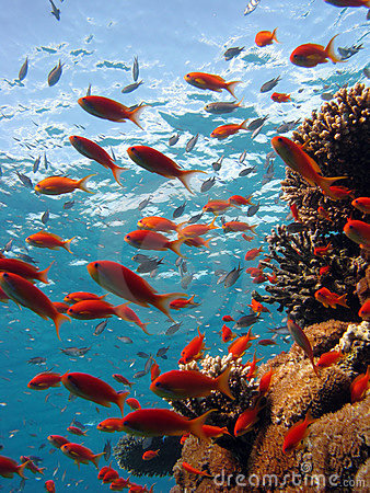 Free Coral Scene Royalty Free Stock Images - 3886559