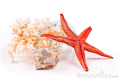 Coral, sea-star and seashell