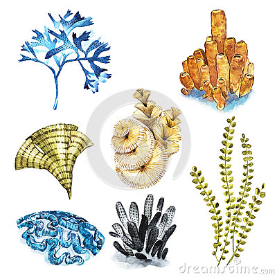 Free Coral Set. Aquarium Concept For Tattoo Art Or T-shirt Design Isolated On White Background. Stock Photo - 97463390