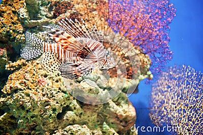 Corals and deep-sea fish