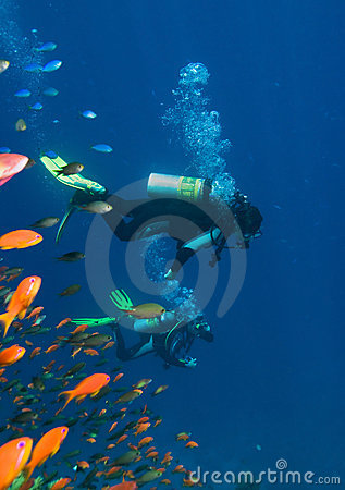 Corals, fishes and divers