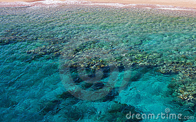 Corals in water