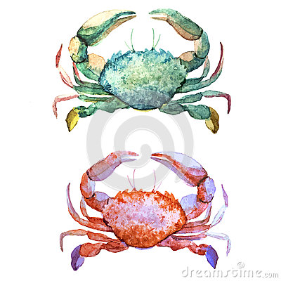 Free Corals With Shells And Crabs Stock Photography - 50082472