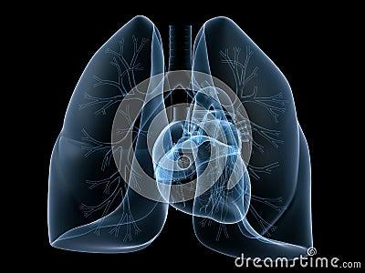 Coração e pulmão