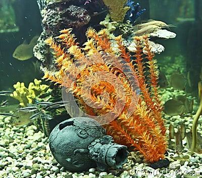 coraux algues et cruche aquarium photo libre de droits image 17069105