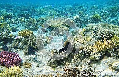 Corel reef view