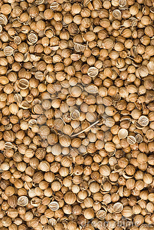 Free Coriander Seeds Royalty Free Stock Photography - 11679447