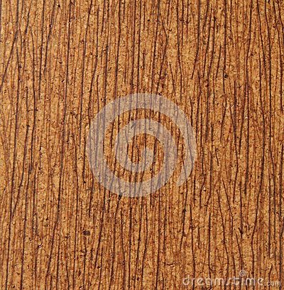 Corkwood background