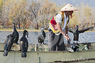 Cormorant Fishing in China Editorial Photo