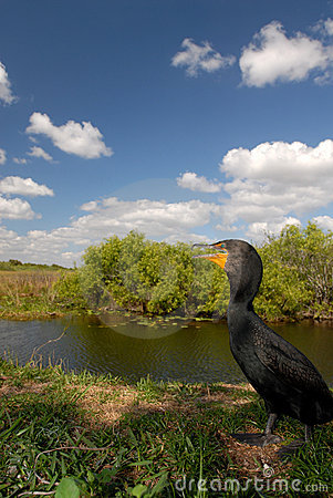 Cormorant Habitat