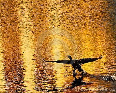 Cormorant sunset