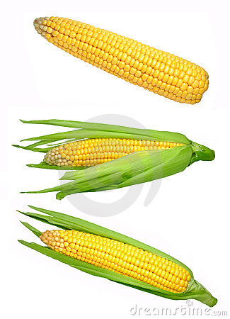Free Corn Royalty Free Stock Photo - 16269365