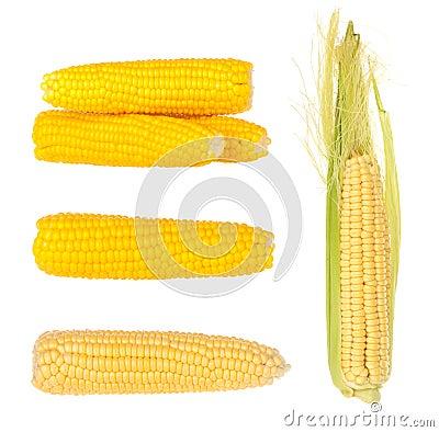 Free Corn Royalty Free Stock Photography - 26116597