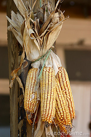 Free Corn Stock Photos - 287483