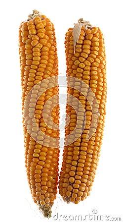 Free Corn Royalty Free Stock Photo - 3332075